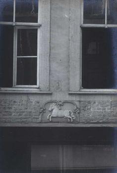 Maastricht. Gevelsteen 'In 't Wit Peerdt,' Muntstraat 10.
