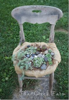 old...chair...succulent garden by whitney