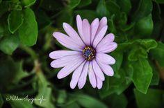 Flower 🌸