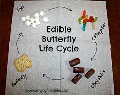 Image from http://www.myjoyfilledlife.com/wp-content/uploads/2014/04/Edible-Butterfly-Life-Cycle-1024x815.jpg.