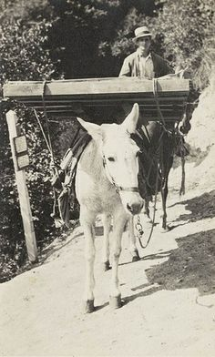 Jack Moffat and packtrain. The junction has been identified as located on Sturtevant Trail near Chantry Flats where one trail leads to Hoegee's Camp. According to Jim Heasley, the mule is named Sparky.