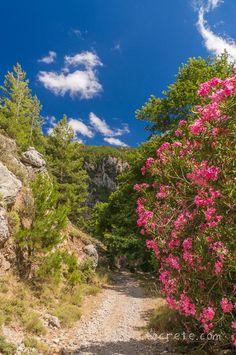 Ущелье Агия Ирини | Agia Irini gorge