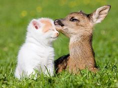 A small, orange and white kitten cuddling faces with a small deer in the grass.