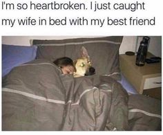 Here are 53 very funny memes of the day to make your laugh. Don't forget to share this hilarious meme pictures with your friends. Cute Funny Animals, Funny Cute, Hilarious, Lol Funny, Funny Stuff, Funny Things, Dumb Jokes, Funny Memes, Funny Fails