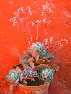 Home Decor, Flowerpot, Plant, Decoration, Red #homedecor, #flowerpot, #plant, #decoration, #red