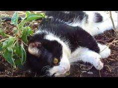 Pokey Being a Little Slow - Grumpy Cat