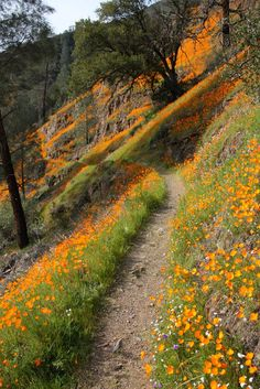 Wildflower Path, Merced River near Yosemite, California.