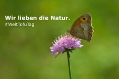 Feiere mit uns den WeltTofuTag am 25. August in Berlin - mit vielen Infos zum Tier- und Naturschutz!