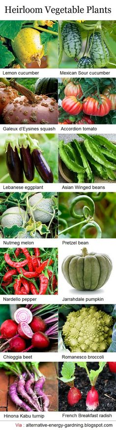Heirloom Vegetable Plants- time to order seeds!