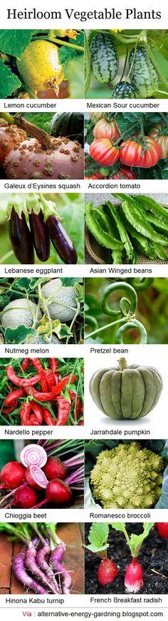 Alternative Gardning: Heirloom Vegetable Plants