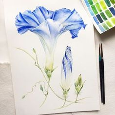 Ideas Flowers Blue Drawing Watercolour For 2019 Watercolor Pictures, Watercolor And Ink, Watercolor Flowers, Drawing Flowers, Watercolor Painting Techniques, Watercolour Painting, Blue Drawings, Art Drawings, Botanical Art
