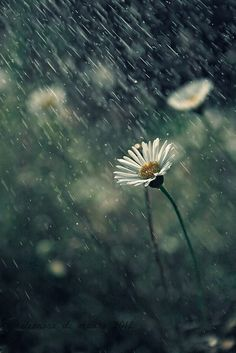 Come l'ho scattata: come creare la pioggia
