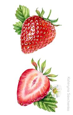 Watercolor botanical illustration of whole and a half of strawberry - detailed commercial illustration by Kateryna Savchenko Watercolor Fruit, Fruit Painting, Watercolor Flowers, Watercolor Paintings, Simple Watercolor, Tattoo Watercolor, Watercolor Animals, Watercolor Techniques, Watercolor Background