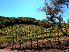 Malibu Wines Tasting Room in Malibu, CA