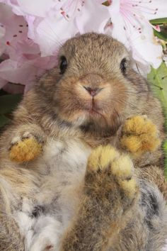 Cute animals baby rabbit http://www.girlsaskguys.com/Other-Questions/894303-what-s-cutest-animal-in-world.html