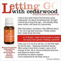 Young Living Essential Oils: Cedarwood Testimony