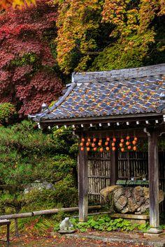 京都の紅葉2015・落葉積もる金蔵寺 : 花景色-K.W.C. PhotoBlog
