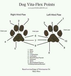 #Dogreflexology .    Re-pinned publicly by www.DianesOils.com  :)