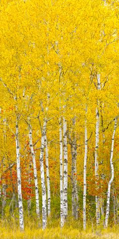 Chequamegon National Forest, Wisconsin; photo by Igor Menaker. Looks like a Klimt painting!