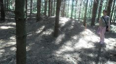 An anthill more than 4 meters across