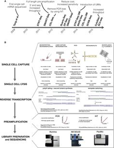 The Technology and Biology of Single-Cell RNA Sequencing - The differences between individual cells can have profound functional consequences, in both unicellular and multicellular organisms. Recently developed single-cell mRNA-sequencing methods enable unbiased, high-throughput, and high-resolution transcriptomic analysis of individual cells. This provides an additional dimension to transcriptomic information relative to traditional methods that profile bulk populations of cells. Already…