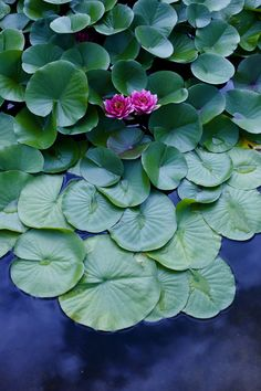 **Waterlily Source: Flickr / cocoaloco,