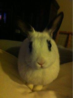 Elisabeth Harnois from CSI: Crime Scene Investigation has a little rabbit named Teenie.