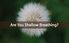 Thyroid And Adrenal Issues Connected To Shallow Breathing. Dr. Frank discusses the thyroid and shallow breathing: