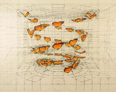 drawing butterfly-shell-01