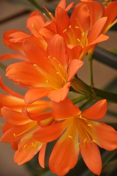 The 20 Most Beautiful Flowers In The World | The Stuff Makes Me Happy, Orange Lilies.