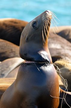 """""""Doesn't this make you SAD? Doesn't this make you MAD? ! ! ! What part can YOU do to eliminate hazards & pollution to our habitat/planet?? If you don't know ~ Find out ! ! ! Also get someone else involved!"""" ~ Garbage from humans in the oceans is wreaking havoc on its wildlife!"""