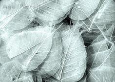 Leaf Art, Teal Photograph, Nature Print, Light Blue Art, Leaves, Minimal, Aqua Home Decor Wall Art, Real Leaf, Time, 8x10 on Etsy, $30.00