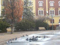 City break în Cluj Napoca City Break, Modern, Outdoor, Outdoors, Trendy Tree, Outdoor Games, The Great Outdoors