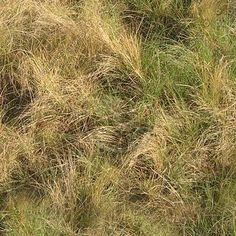 wild grass texture.  Texture Wild Grass Texture Maps Available On Turbo Squid The Worldu0027s Leading  Provider Of Digital Models For Visualization Films Television And Games Inside