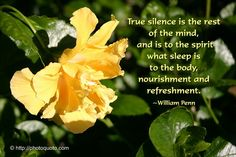 True silence is the rest of the mind and is to the spirit what sleep is to the body, nourishment and refreshment . Inspiring Meaning, William Penn, Finding Joy, Powerful Words, Great Quotes, Grief, Inspire Me, Quotations, Health And Wellness