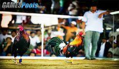 Kelebihan dan Peluang di Online Sabung Ayam - Online Blackjack Informasi