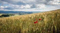 https://flic.kr/p/H7AgAm | Tuscany in red - Volterra, Pisa - Landscape photography | If you like my pictures please support me buying a print from my shop www.pixael.com/en/pictures thanks!  You can follow me on https://www.facebook.com/giuseppemilophoto https://twitter.com/pixael_com https://instagram.com/pixael/
