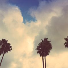 """""""Row of Palm Trees on Cloudy Day"""" by Laura Drake Enberg - £10"""