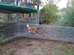 Chicken Run!looks like its off ground I'd want them to be able to scratch but a bottom isn't a bad idea for prediters