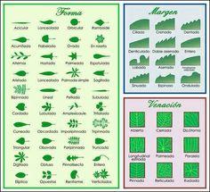 Folhas - Botânica