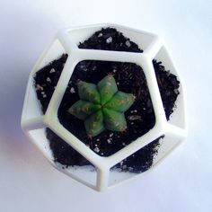 3D Printed  Dodecahedron Planter Geometric Terrarium  by MeshCloud
