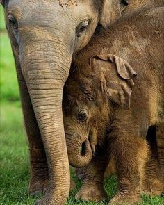 I can't handle how adorable it is. .!! From :  @daily_elephant.lovers -  Elephant mom and baby  - . . For info about promoting your elephant  art or crafts send me a direct message @elephant.gifts or email elephantgifts@outlook.com  . Follow @elephant.gifts for beautiful and inspiring elephant  images and videos every day! . #elephant #elephants #elephantlove