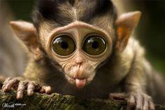 Little Monkey -