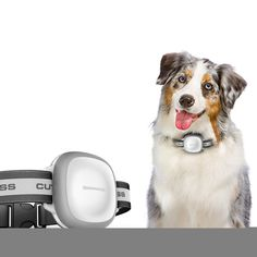 Cheap pet collar gps, Buy Quality collar gps directly from China locator gps Suppliers: Mini Waterproof Pets Collar GPS Tracker Real time Locator GPS+LBS+WIFI Location Locator for Dog Cat Tracking Geofence Dog Control, Airline Pet Carrier, Mini Gps Tracker, Ios, Tracking System, Dog Crate, Gps Navigation, Pet Collars, Dog Walking