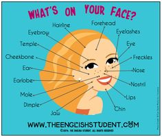 The English Student, www.theenglishstudent.com, English Student, ESL blog, ESL website, ESL teaching ideas, facial features, names of featur...