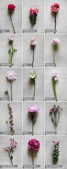 just a little guide :: pink flowers by name
