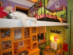 Cat house!