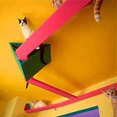 410 best home design with cats or dogs in mind images pets dog rh pinterest com