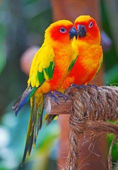 beautiful amzing lovely place - Animals/Birds - Community - Google+