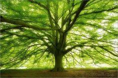Bath, Somerset, England (via Tree Photographs)